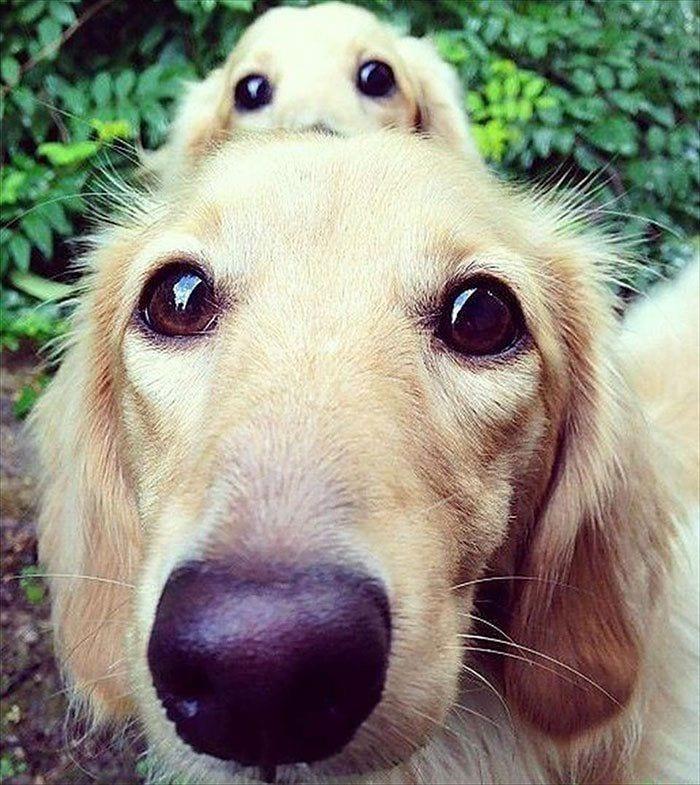perros en familia1