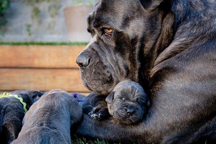 perros en familia10