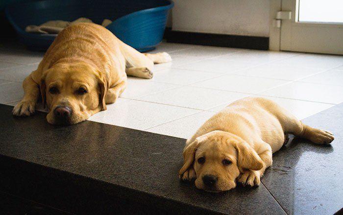 perros en familia12