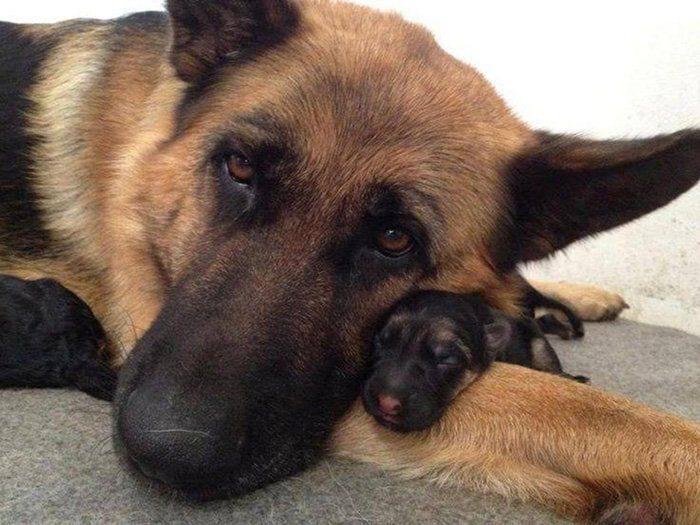 perros en familia13