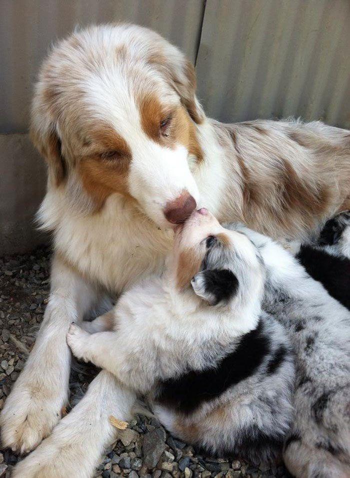 perros en familia15