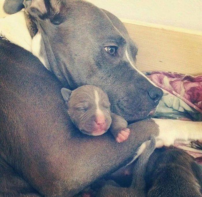 perros en familia18