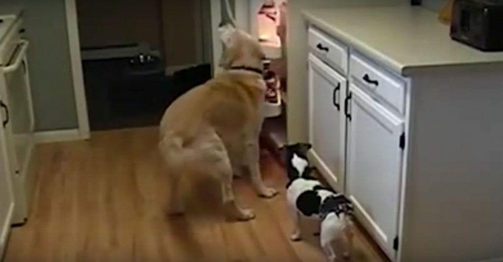 perros ladrones