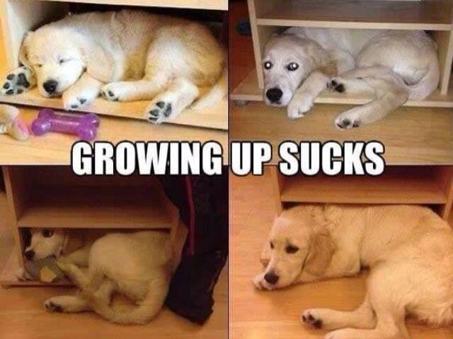 perros-vida-adultos-19