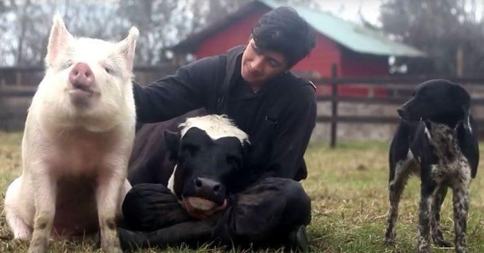amistad animales granja