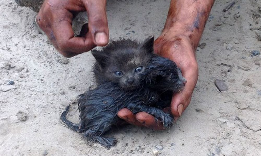gato_rescatado_