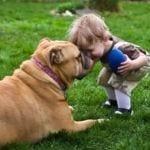 lecciones vida perros