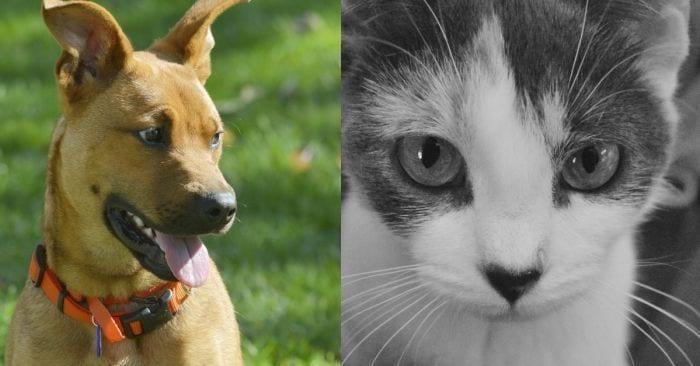 mascotas circunstancias destacada