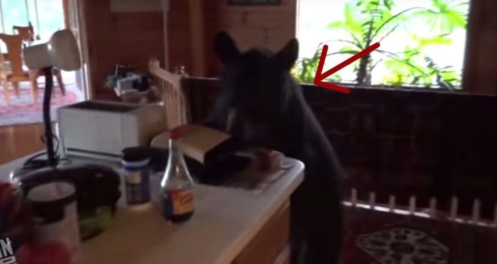 oso cocina