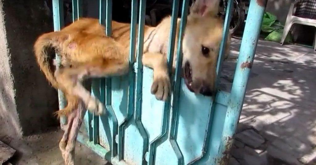perra atrapada puerta
