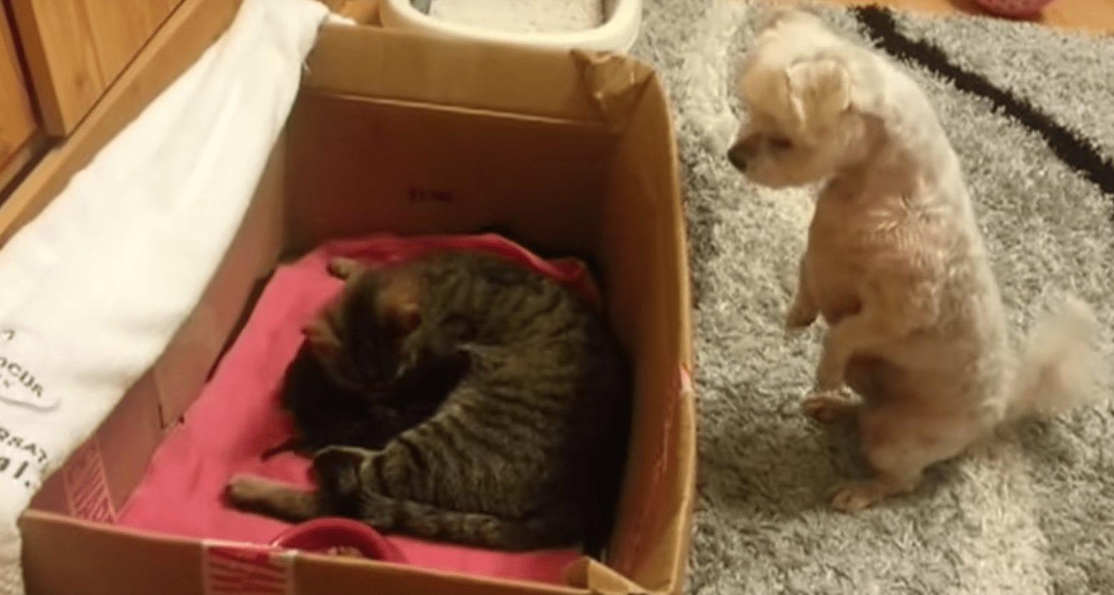 perro gatitos1