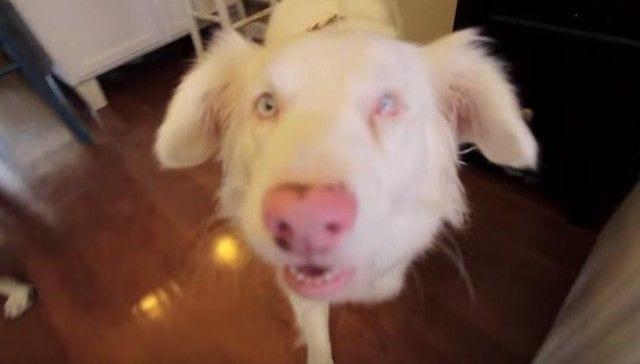 perro-sordo-adoptado-01