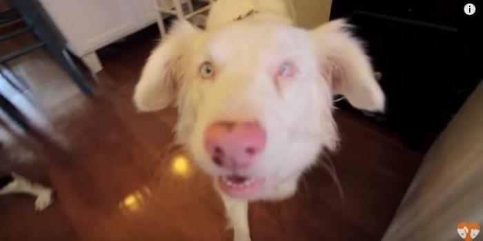 perro sordo adoptado 03