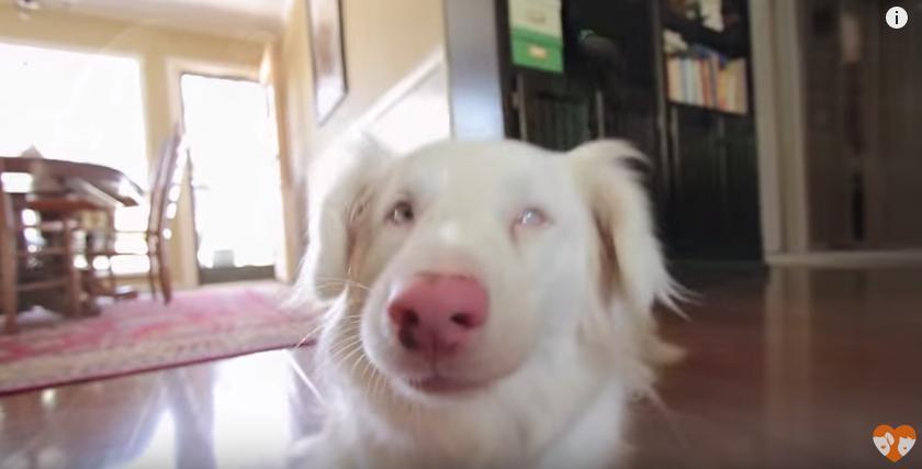 perro-sordo-adoptado-04