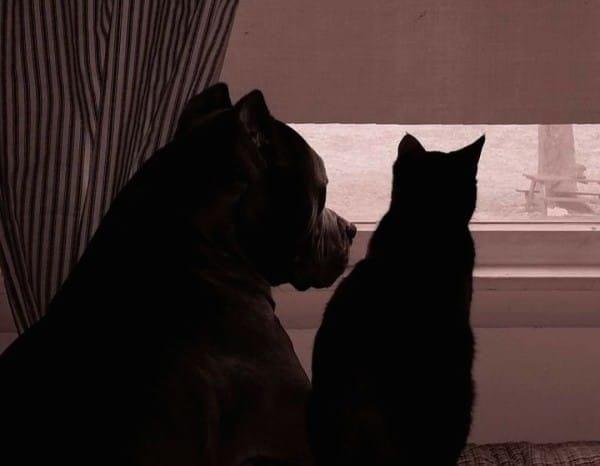 pitbull-adopta-gatito-04