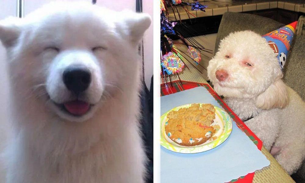 sonrisa perros destacada