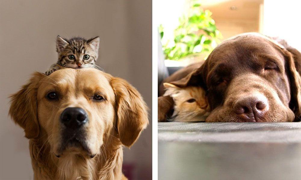amigos gatos perros destacada