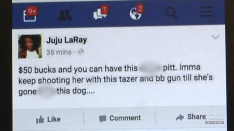 dice en facebook matar perro 01
