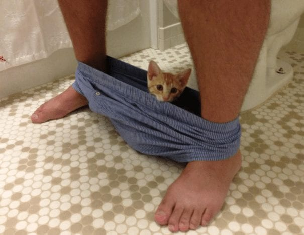 gatos invadiendo intimidad 06