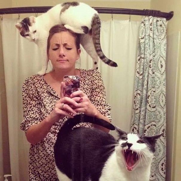 gatos-invadiendo-intimidad-11