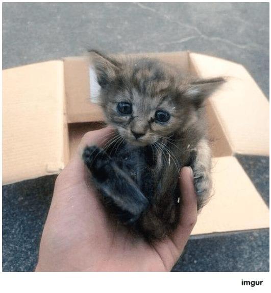 gatos-rescate1