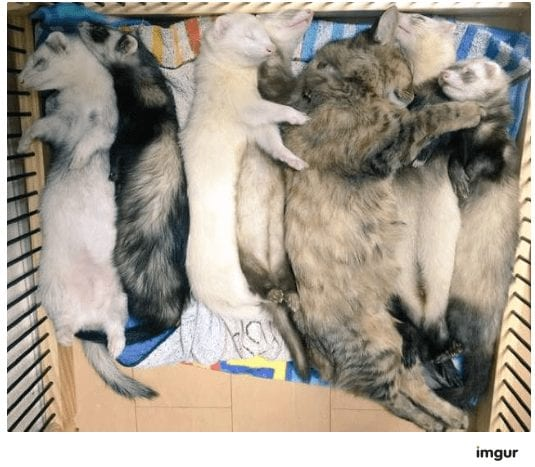 gatos-rescate10