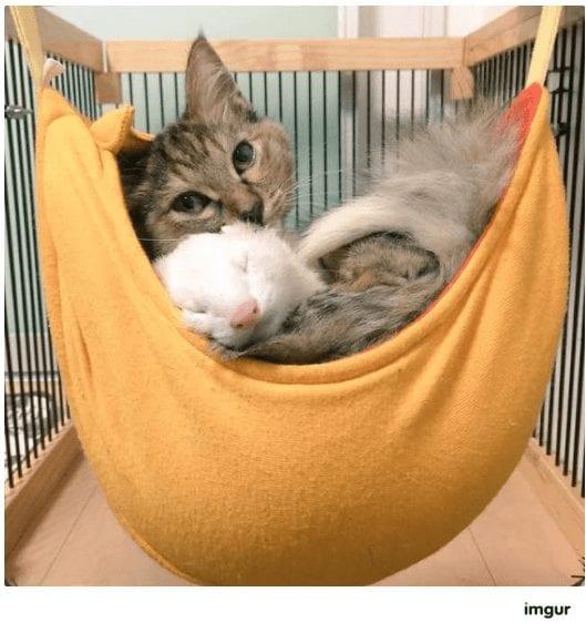 gatos-rescate12