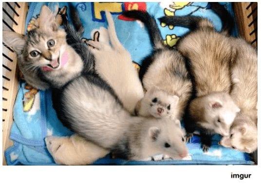 gatos-rescate2
