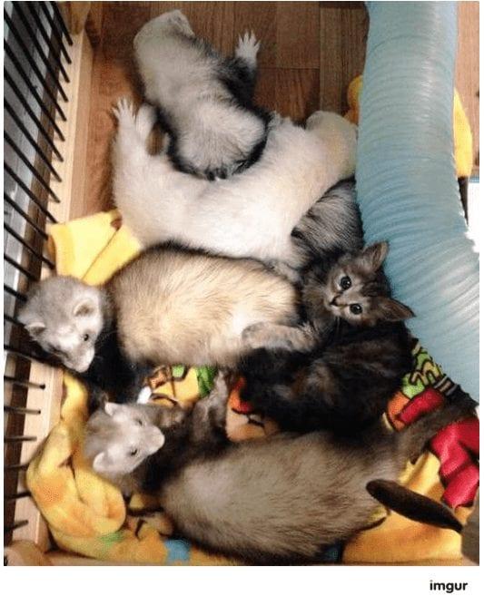 gatos-rescate3