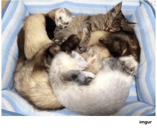 gatos-rescate5