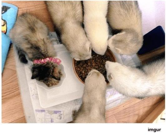 gatos-rescate6