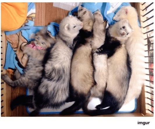 gatos-rescate7