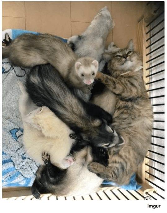 gatos-rescate8