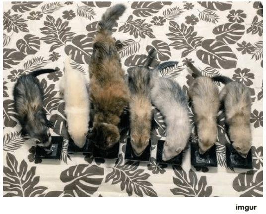 gatos-rescate9