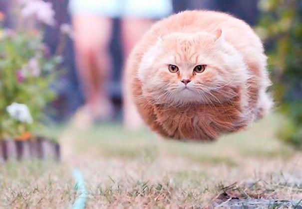momento exacto gatos 01 1