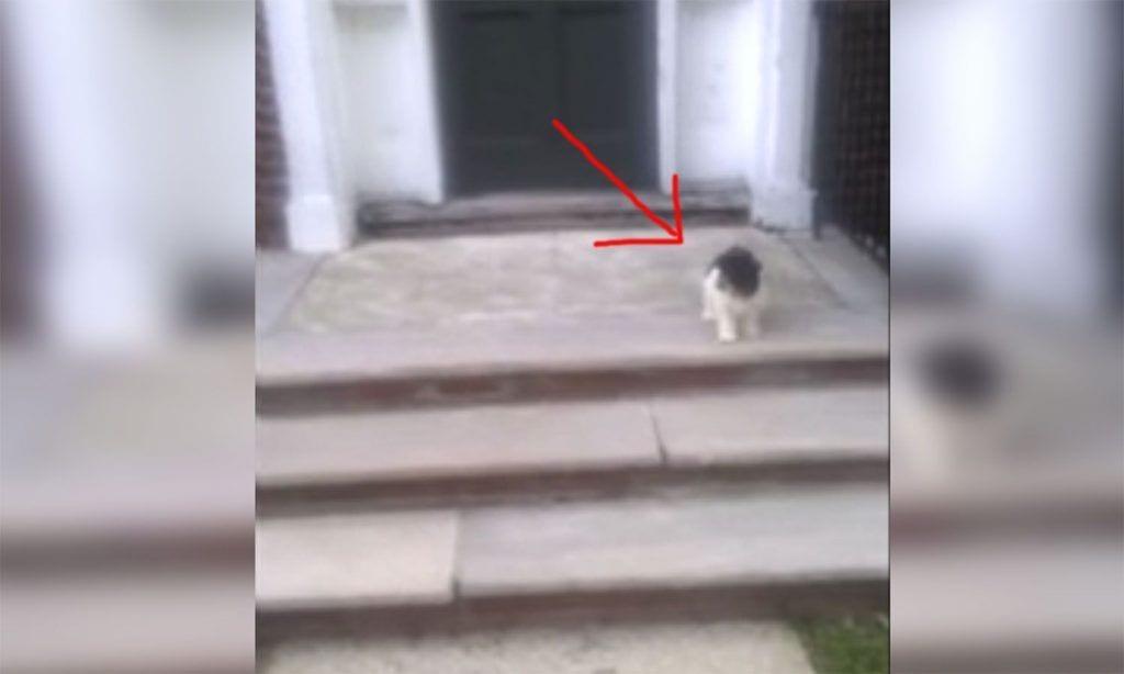 perro escaleras