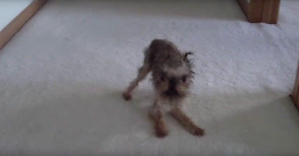 perro parlante ducha
