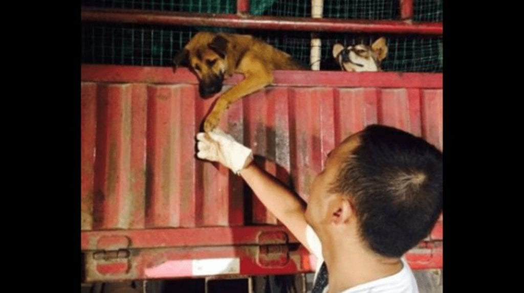perro rescate1