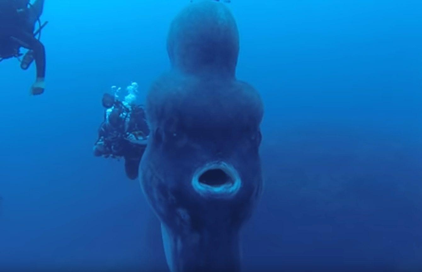 pez luna gigante