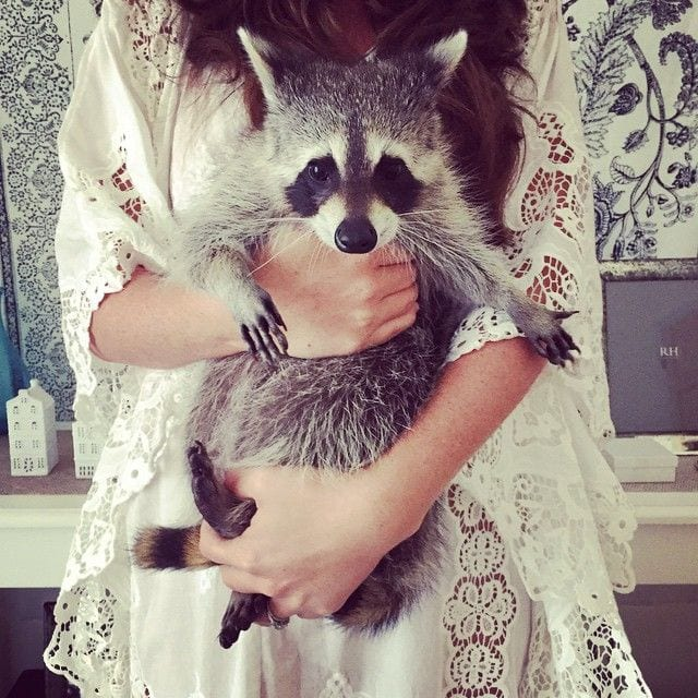 pumpkin-el-mapache-que-se-creia-un-perro-21