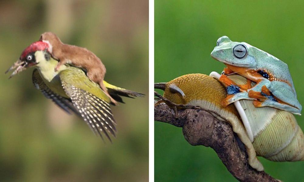 animales viajando en otros destacada