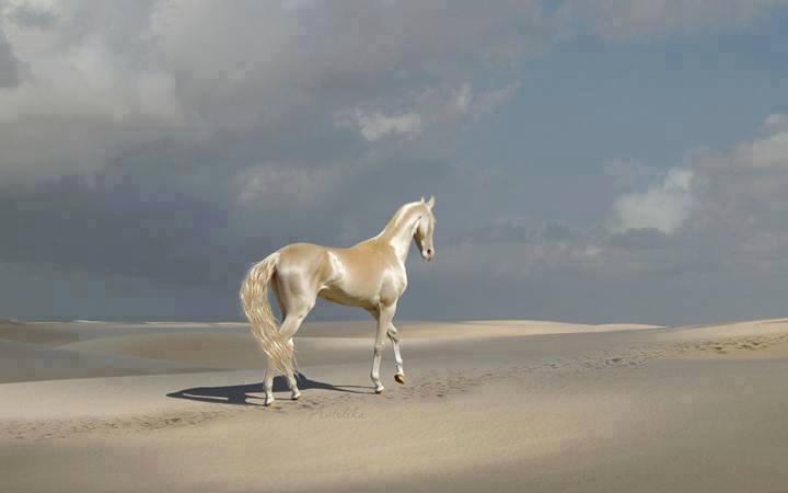 caballos dorados 12