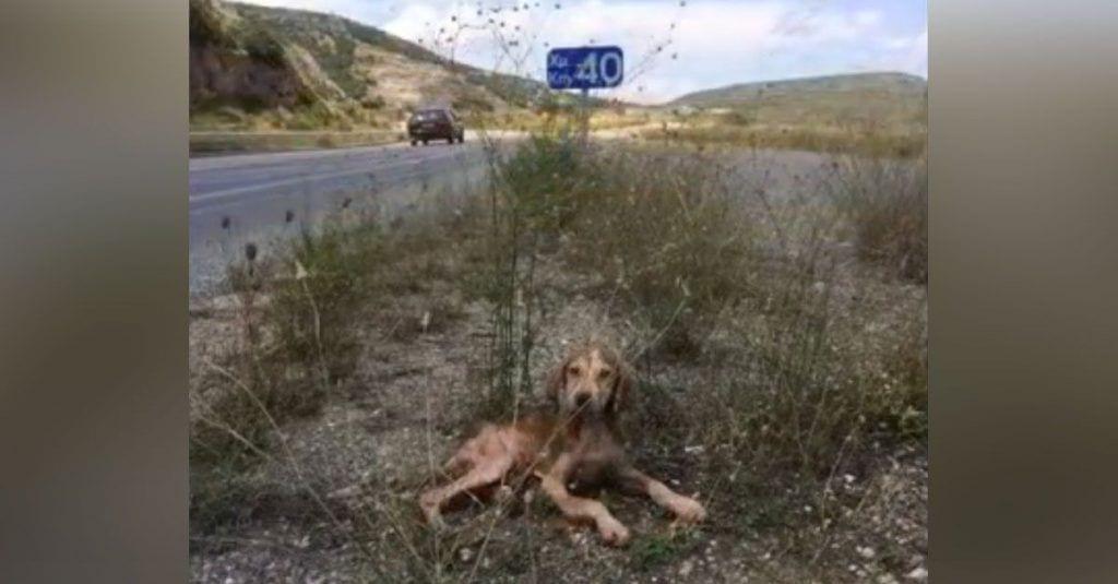 cachorro abandonado recuperacion