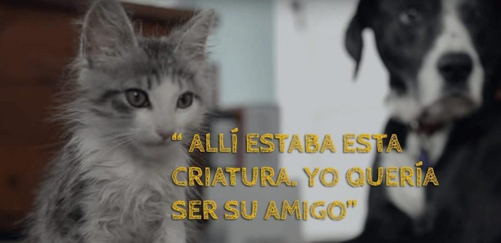 gato adoptado 01