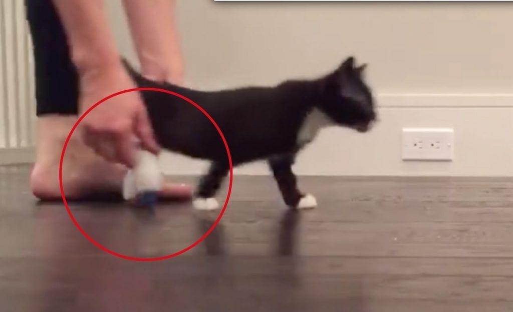 gato piernas