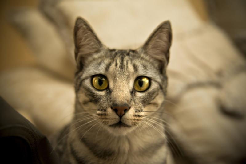 gatos-amor-04