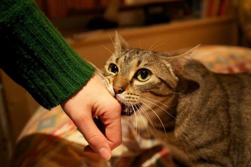 gatos-amor-07