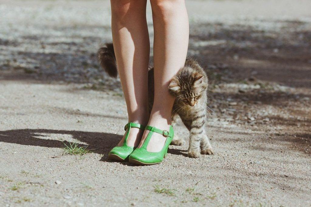 gatos amor 08