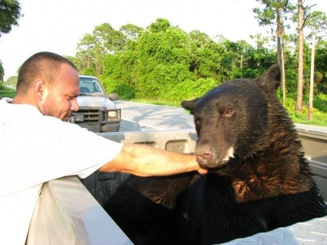 hombre-salva-oso-15