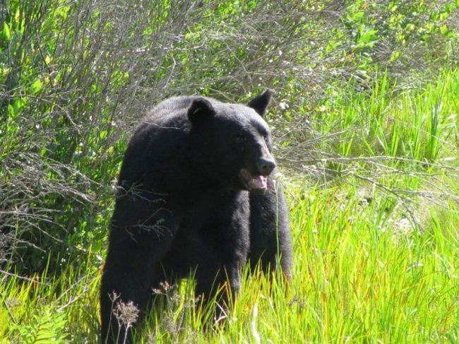 hombre-salva-oso-16